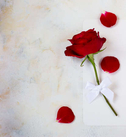 One red rose on a light background. space for text, postcard