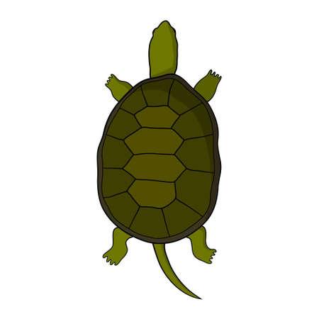 tortuga: Dé la ilustración tortuga dibujado en el estilo de dibujos animados. Aislado. Sobre un fondo blanco Vectores