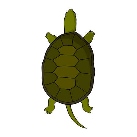 pose: Hand drawn tortoise illustration in cartoon style. Isolated. On a white background