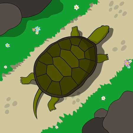 tortoise: Tortoise crawling on a footpath in a sunny day. Hand drawn tortoise illustration in cartoon style. Illustration