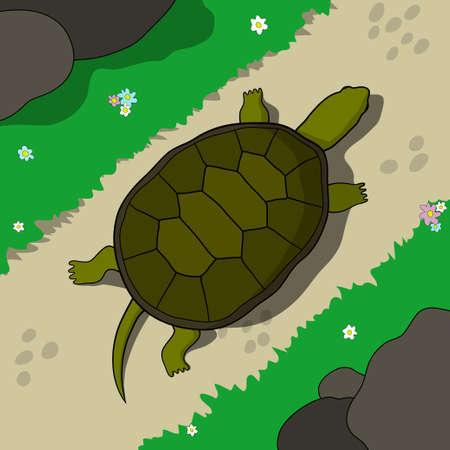 tortuga: Tortuga que se arrastra en un sendero en un día soleado. Dé la ilustración tortuga dibujado en el estilo de dibujos animados.
