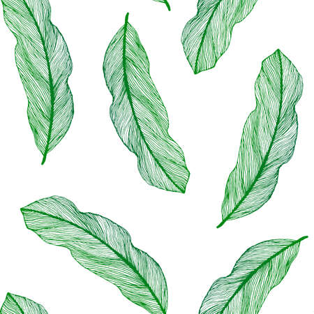 bird feathers: graphic seamless pattern from green leaves houseplant hand-drawn in a linear style. Seamless texture of sketch bird feathers isolated on white background. For wrapping paper, fabric, textile. Illustration