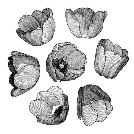 Number Names Worksheets pictures of flowers to trace : 206 Trace Of Freehand Drawing Cliparts, Stock Vector And Royalty ...
