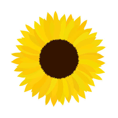 Vector doodle sunflower illustration. Simple hand drawn icon of flower with yellow petals isolated on white background. Flat cartoon style.