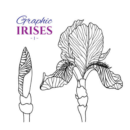 Graphic illustration of irises from different angles, set part 1. Hand drawn flowers and buds in line art style. Beautiful blossoms for romantic design of wedding invitation, advertising, booklets.