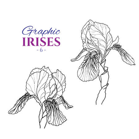Graphic illustration of irises from different angles, set part 6. Hand drawn flowers and buds in line art style. Beautiful blossoms for romantic design of wedding invitation, advertising, booklets. Çizim