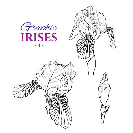 Graphic illustration of irises from different angles, set part 4. Hand drawn flowers and buds in line art style. Beautiful blossoms for romantic design of wedding invitation, advertising, booklets. Çizim