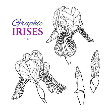 Graphic illustration of irises from different angles, set part 2. Hand drawn flowers and buds in line art style. Beautiful blossoms for romantic design of wedding invitation, advertising, booklets.  Illustration