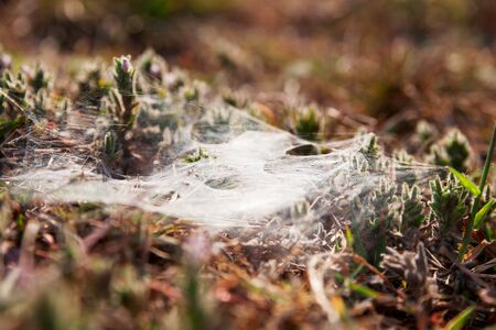 spiders web: Spiders web on grass and flowers. Early morning in Cambodia. Natural background with soft focus.