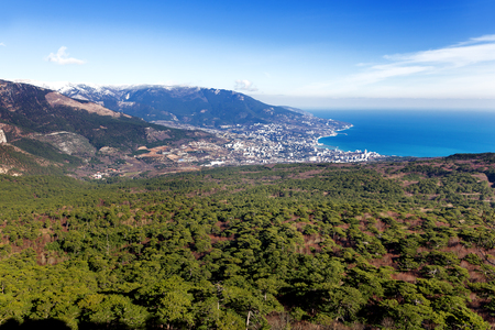forest park: Panorama view of Yalta town from Ai-Petri mountain. Snow and iced pine trees on sunny winter day. Crimea, Black sea, Russia.