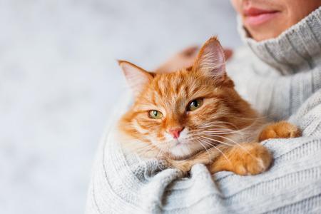 sueteres: El hombre en el suéter hecho punto del gato del jengibre explotación.
