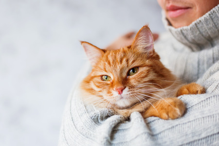 Man in knitted sweater holding ginger cat. Imagens - 49129324