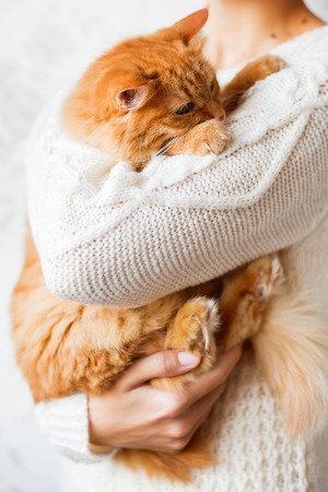 dozing: Woman in knitted sweater holding dozing ginger cat. Stock Photo