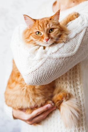 herrin: Frau in der gestrickten Pullover Halte Ingwer Katze. Pet versteckt in den Armen sie die Geliebte.