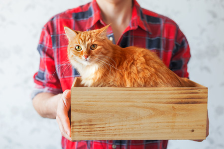 adopting: Man in red tartan plaid shirt holds a wooden box with cute ginger cat. Symbol of adopting animals. Place for text.