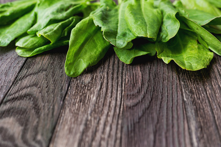 edible leaves: Fresh leaves of sorrel on wooden background. Rustic table with green edible leaves. Place for text.