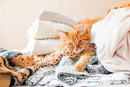 dozing: Cute ginger cat sleeps on a pile of knitted clothes. Warm knitted sweaters and scarfs are folded in heaps. Fluffy pet is dozing among cardigans. Cozy home background. Stock Photo