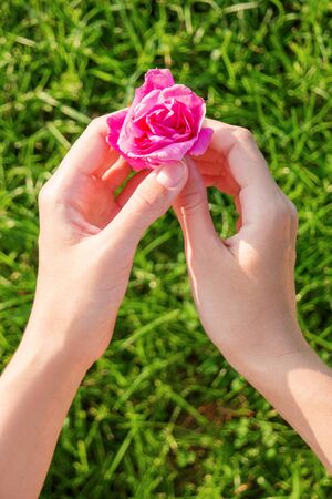 wild rose: Woman holds a wild rose flower. Bright pink flower on green grass blurred background.