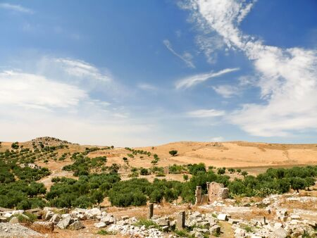 olive groves: Olive groves around ancient ruins of roman City of Dougga, Tunisia. Bright blue day with sun and clouds.