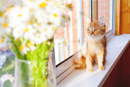 Cute ginger cat with bouquet of camomila flowers. Cozy morning at home.