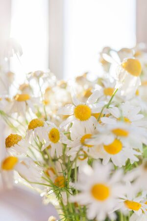 Bouquet of camomila flowers at sunlight. Cozy summer morning at home. Imagens