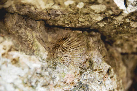 Imprint of an ancient mollusk on a rock. Crimea.
