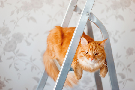 unsatisfied: Cute ginger cat sits on ladder. Fluffy pet with unsatisfied expression on face. Place for text.