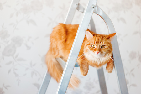 discontented: Cute ginger cat sits on ladder. Fluffy pet with unsatisfied expression on face. Place for text.