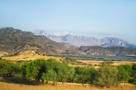 olive groves: Mountains with olive groves. Landscape in Tunisia.