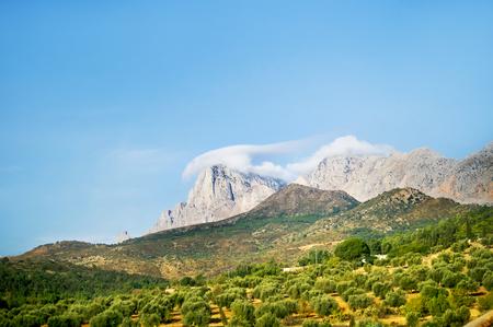 arboleda: Montañas con olivares. Paisaje en Túnez.