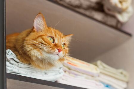 bed linen: Cute ginger cat sleep in forbidden place - in wardrobe with clean bed linen. Stock Photo