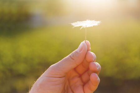 Mans hand with feather seed of dandelion. Symbol of fragility and lightness.