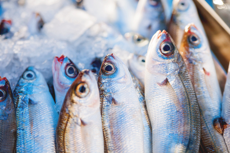Box full of freshly caught mackerel fish. Early winter morning on Marsaxlokk market, Malta. Stock Photo