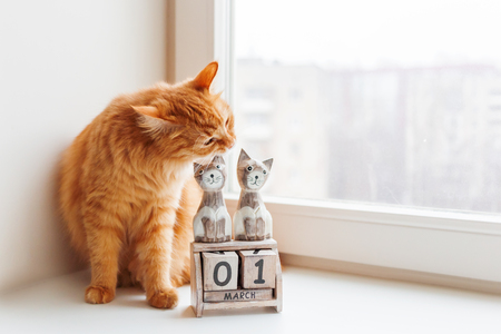 Cute ginger cat biting wooden calendar with cats and date March 1st. International Day of Cats.