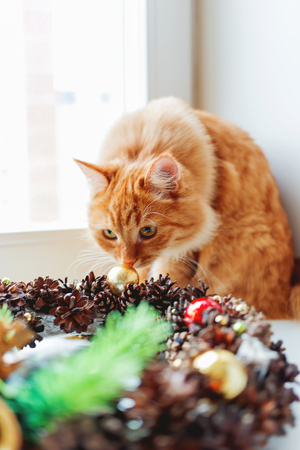 Cute ginger cat sniffing handmade Christmas wreath. Fluffy pet and craft New Year decoration.