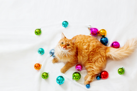 Cute ginger cat lies among christmas decorations - bright colorful balls. The fluffy pet comfortably settled to play. Cozy holiday background, morning bedtime at home. Flat lay, top view.