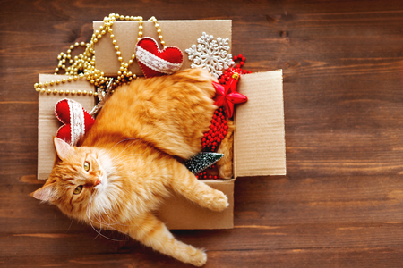 Ginger cat lies in box with Christmas and New Year decorations on wooden background. Fluffy pet is doing to sleep there.