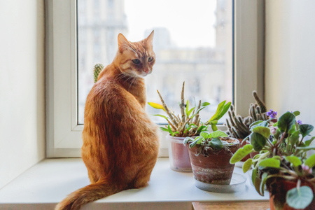 Cute ginger cat sitting on window sill near indoors decorative plants. Cozy home background with domestic fluffy pet.