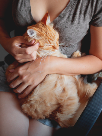 Woman cuddles het cute ginger cat. Fluffy tabby pet looks pleased and sleepy. Cozy home background. Stock Photo