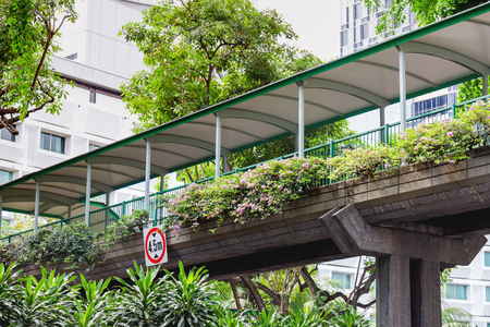 Trees grow along the street with car traffic. Pedestrian crosswalk. Singapore.