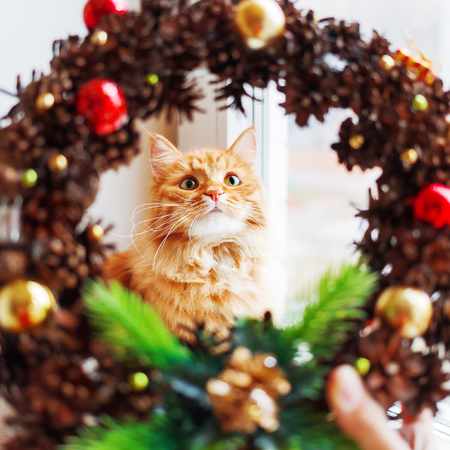 Cute ginger cat looks through handmade Christmas wreath, made of pinecones and decorations. Fluffy pet helps to decorate home to New Year.