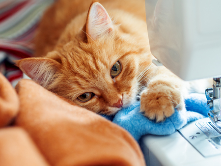 Cute ginger cat is lying behind sewing machine. Fluffy pet at cozy home.