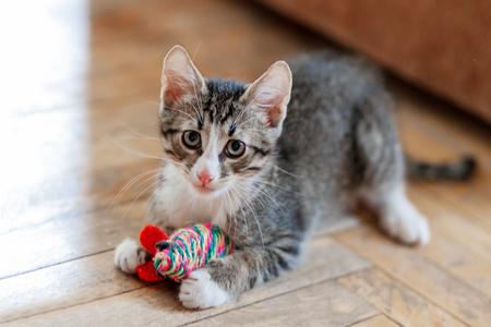 Leuk grijs katje speelt met speelgoedmuis. Grappig huisdier op de vloer.