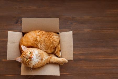 Niedliche Ingwerkatze liegt im Karton auf Holzhintergrund. Flauschiges Haustier mit grünen Augen starrt in die Kamera. Ansicht von oben, flach.