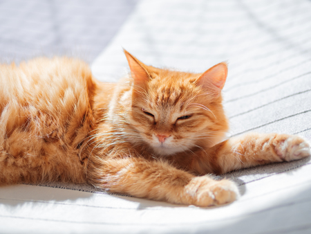 Cute ginger cat lying on bed. Fluffy pet is dozing. Cozy home background. Imagens