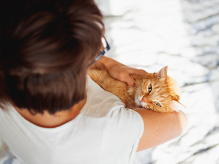 Cute ginger cat lies on womans hands. The fluffy pet comfortably settled to sleep or to play. Cute cozy background. Morning bedtime at home. Banco de Imagens