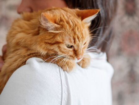 Cute ginger cat is peeping over the shoulder of its owner. Fluffy pet is sitting on mans hands and staring at camera. Domestic cat with funny expression on face looks cunning.