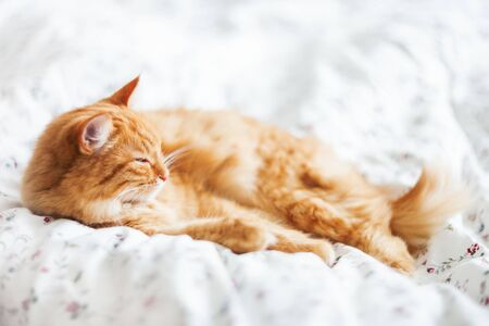 Cute ginger cat lying in bed on a blanket. Fluffy pet comfortably settled to sleep. Cozy home background with funny pet.