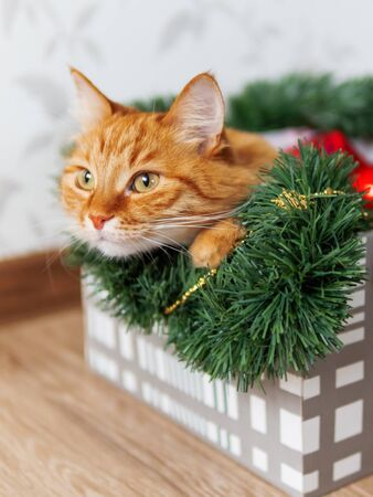 Ginger cat lies in box with Christmas and New Year decorations. Fluffy pet is doing to sleep there. Imagens - 130126116
