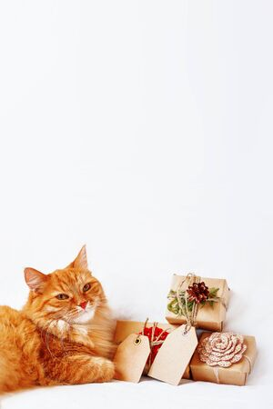 Cute ginger cat with stack of Christmas presents on white background. New Year gifts wrapped in craft paper with copy space tags.